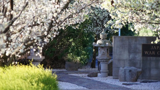 Blossoms illuminate the Japanese War Cemetery in  Cowra.