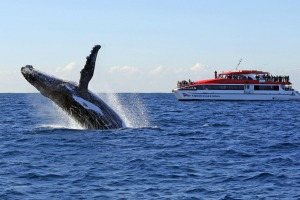 A humpback puts on a show off Sydney.