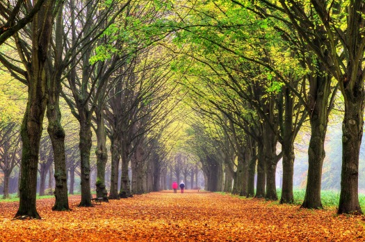 AMSTERDAM FOREST: This man-made beauty on Amsterdam's south-western limits is by far the largest of the city's verdant ...