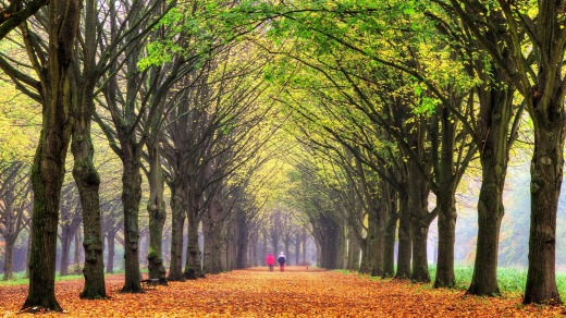 Amsterdam Forest.