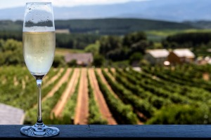 Penedes is famous for being the home of cava, the Spanish version of champagne, which has a DO (Denominación de Origen), ...