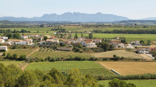 Absurdly pretty: Penedes.