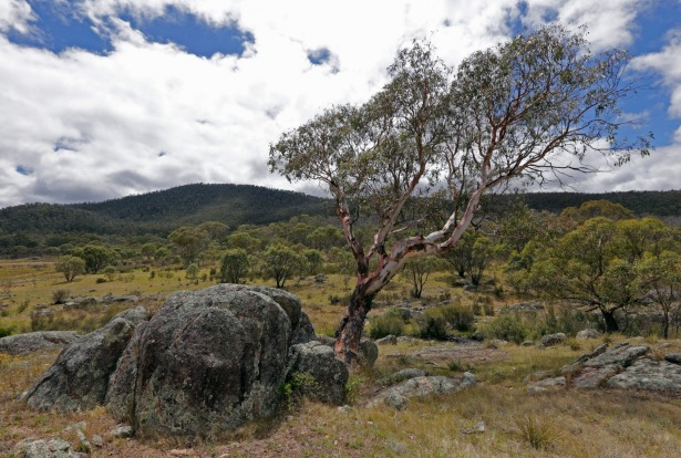 Namadgi National Park, ACT: Just southwest of Canberra, and in the northern reaches of the Australian Alps, Namadgi is a ...