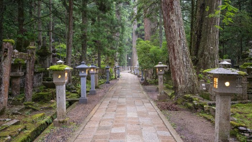 Stone lanterns line the path through the forest at Mount Koya.