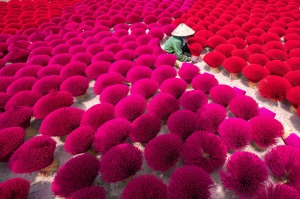 Incense drying in Vietnam.