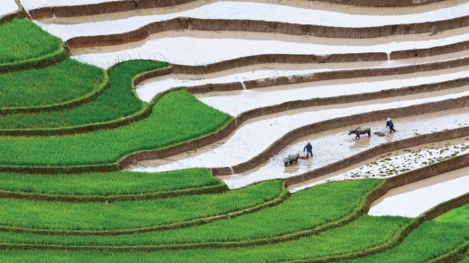 Rice paddy terraces in Vietnam.