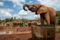 The Sheldrick Trust Elephant Orphans Project in Nairobi, Kenya's capital, east Africa.