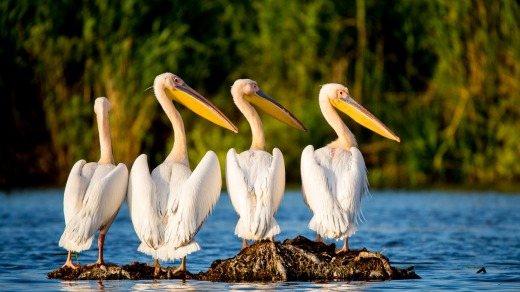 The UNESCO-listed wetland is a peaceful haven to more than 300 species of birds.
