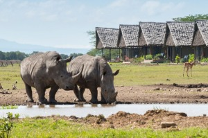 Rhinos by the waterhole at Sweetwaters Serena Camp.