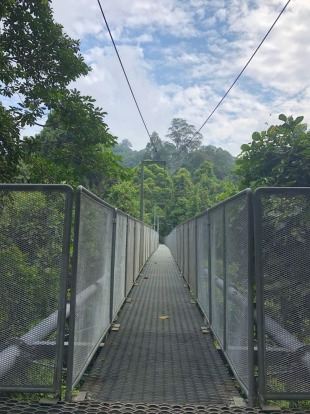 SUNGAI SEDIM TREETOP WALK, MALAYSIA Running for almost a kilometre through the tropical rainforest of Sedim River ...