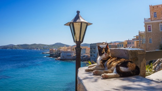A cat relaxes on the Greek island of Syros.