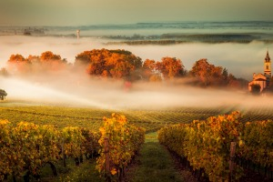 The wine region of Bordeaux, France