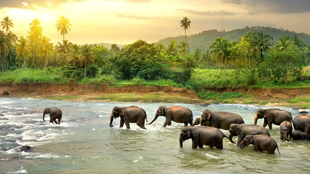See Sri Lanka's incredible wildlife.