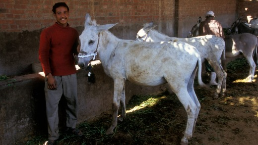 Brooke Hospital has since expanded to countries such as India and Pakistan, and helped millions of animals.