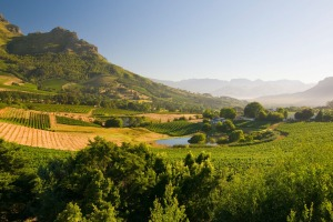 The town of Stellenbosch in South Africa's Western Cape is surrounded by vineyards.