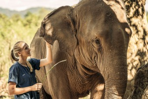 Get up close to Asia'a giants at Anantara Golden Triangle Elephant Camp and Resort.