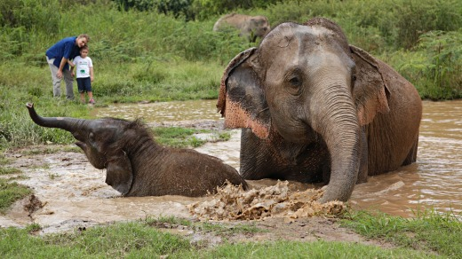Walk with Giants experience at Anantara Golden Triangle Elephant Camp and Resort.