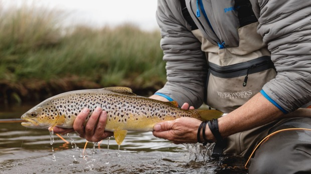 The brown trout is a wary fish but finds it hard to resist the Woolly Bugger.