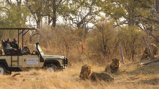 Morning safari at Hwange National Park, Zimbabwe.