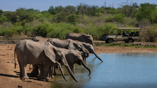 There are plenty of interesting creatures to see at Madikwe Game Reserve, South Africa.