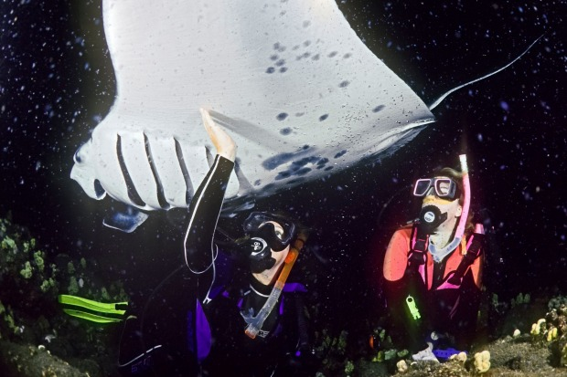 Night Snorkelling with Mantas, Hawaii: Forty years ago, a hotel inadvertently created a tourist attraction by installing ...