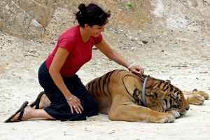 ADDITIONAL RATES MAY APPLY FOR USE OF IMAGE. Tourist patting tiger at Forest Temple aka 'Tiger Temple.' 2010 (AAP ...