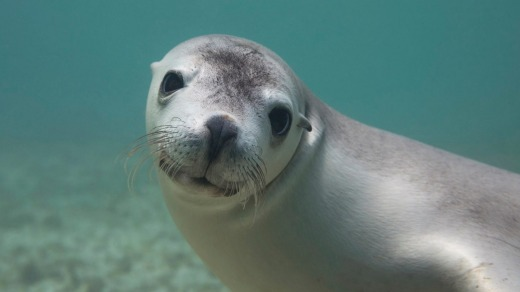 'Swimming with sea lions is like falling in love.'