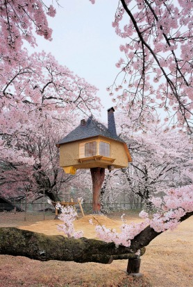 TREEHOUSE TETSU, JAPAN: Leave it to the Japanese to create an exquisite miniature teahouse and set it amid a grove of ...