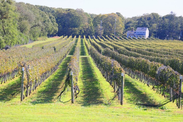 Kontakosta Winery, Long Island: While beaches, boats and seafood are all here, most head to the huge number of wineries ...