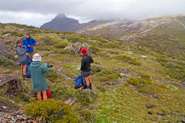 MT ELIZA: For many bushwalkers, Mt Eliza is just a through point to the domineering Mt Anne, but for day walkers the ...