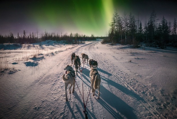 Still, the humble town attracts more than 500,000 visitors annually, with polar bears and northern lights brightening ...