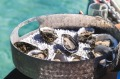 A tray of Coffin Bay oysters – hard to resist.