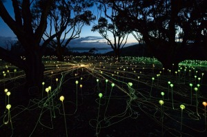 Bruce Munro's Field of Light: Avenue of Honour,  Albany.