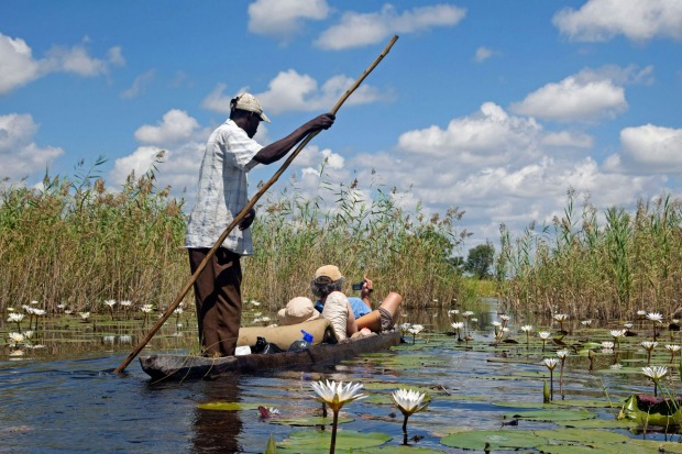Okavango Delta, Botswana: The annual floodwaters of the Okavango River trickle like a leaky hose, slowly fanning out ...
