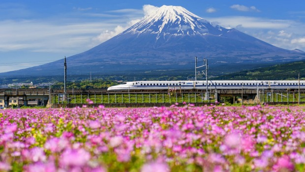 SHIZUOKA JAPAN - MAY 05 2017: Shinkansen or JR Bullet train running pass through Mt. Fuji and Shibazakura at spring. ...