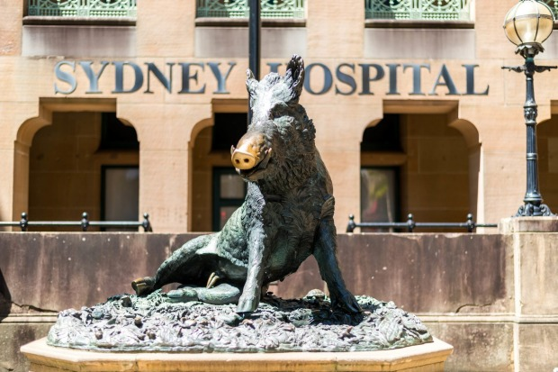 ARTY PIGS AUSTRALIA Il Porcellino is a larger-than-life bronze boar squatting outside Sydney Hospital on Macquarie ...