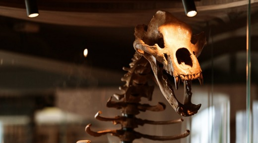 The luxury lounge bar houses 38 glass-encased fossils, including a Russian cave bear.