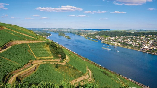 Vineyards along the Rhine River, Germany.