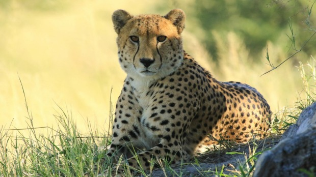 Hwange National Park in Zimbabwe's far west is home to the big five as well as an elusive number of cheetah.