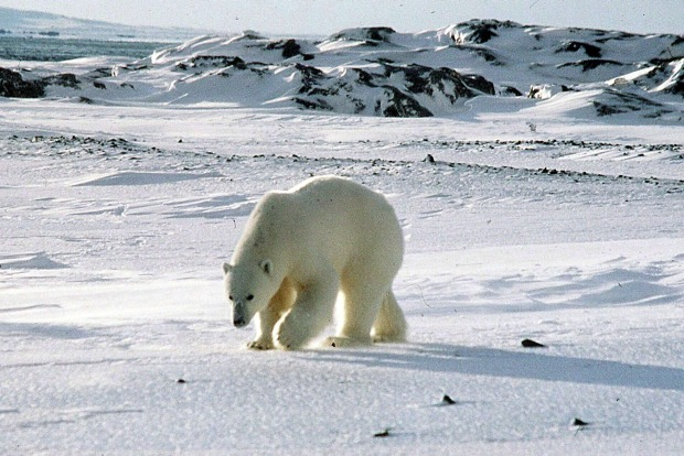 The Svalbard archipelago is a magical frozen kingdom in the High Arctic, midway between mainland Norway and the North ...