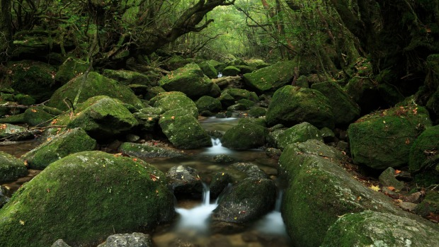 The spectacular, and oh-so-green, Shiratani Unsui Gorge in Yakushima.