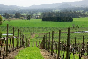 Vineyards in King Valley, Victoria.