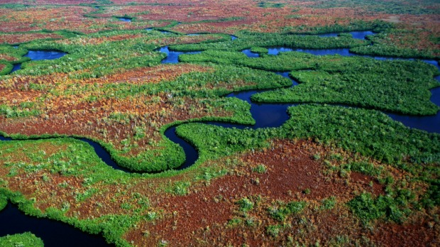 Everglades: The 'most threatened park in the US'.