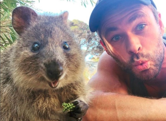 Rottnest Island, WA: What Maria Island does with wombats, Rottnest Island does with quokkas. But it's not just about ...