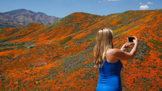 Renee LeGrand takes a picture among wildflowers.