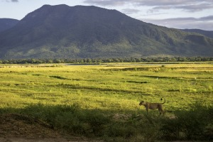 If Mana Pools were in any other southern African country, it would boast the world-wide kudos of Kenya's Masai Mara ...