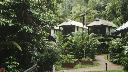 Daintree Ecolodge.