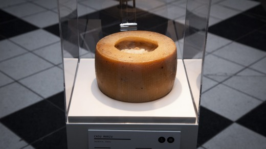 The Sardinian casu marzu is a wheel of pecorino with live maggots boring their way through its centre.