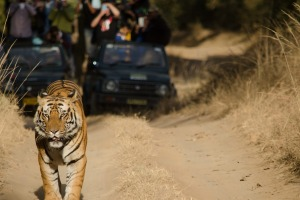 Even in a national park with more tigers than any other, sightings are not guaranteed.