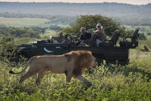 "Lions – one of Africa's ""big five"" – are a huge drawcard for tourists."